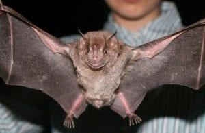 removing bat
