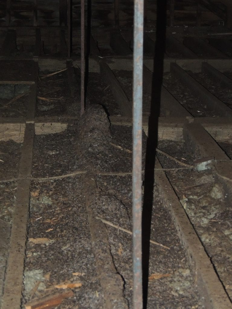 bat guano in attic