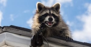 Residential Wildlife Removal Central in West Michigan