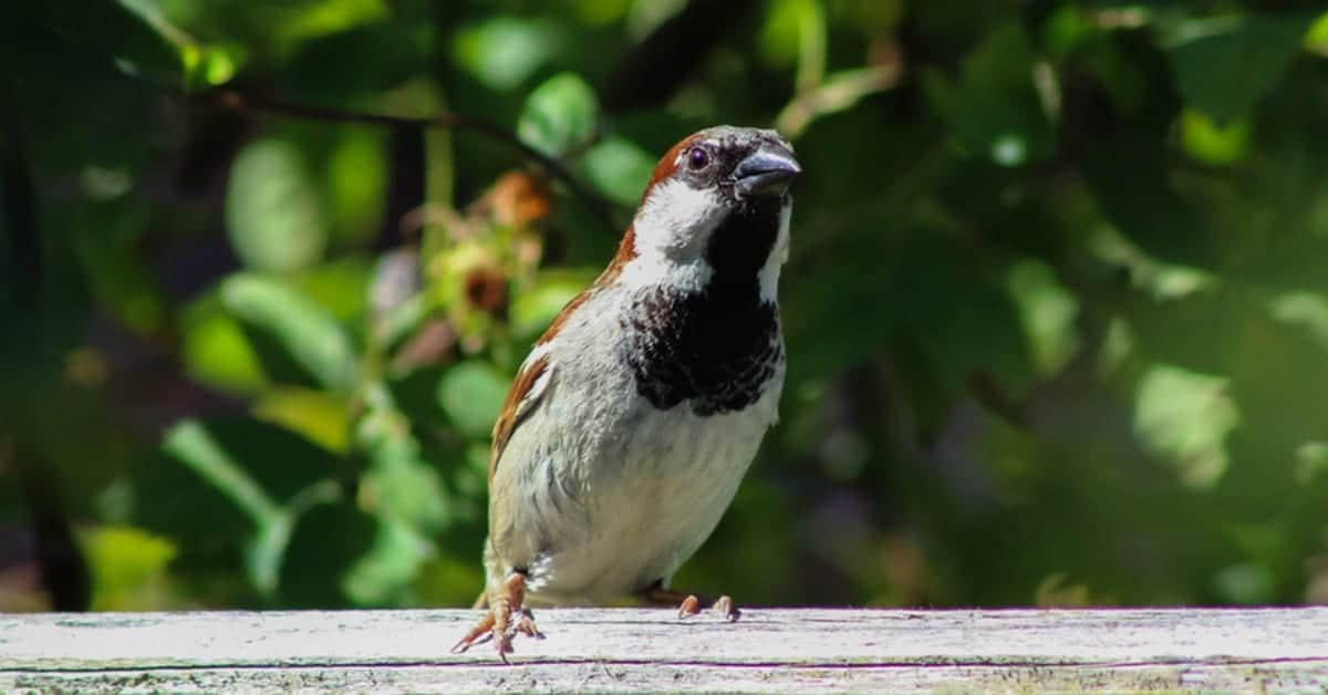 Commercial & Residential Bird Control West/Central Michigan