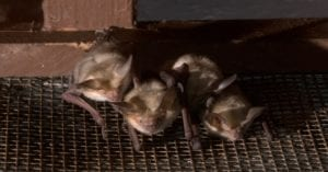 Bats grouped together