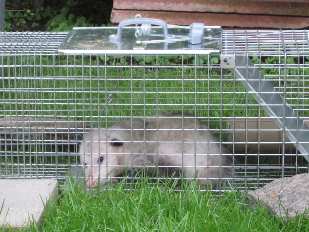 Wildlife Removal & Control Services