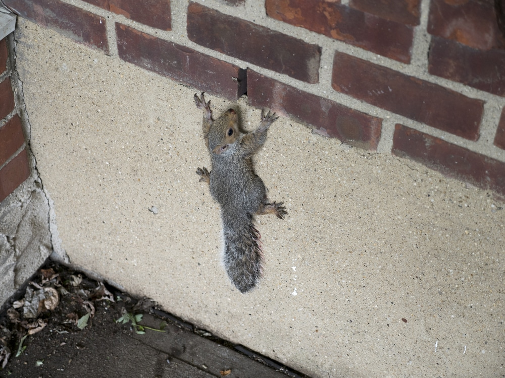Commercial Wildlife Removal and Control